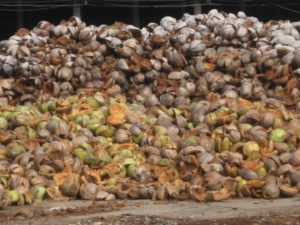 A pile of coconut husks