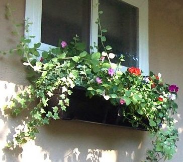 Two window boxes on a home with flowers and ivy