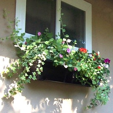 The Best Trailing Plants For Hanging Baskets Amp Window
