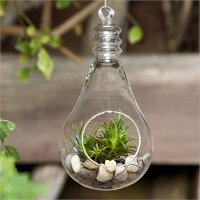 6.5 Inch Hanging Glass Light Bulb Terrarium