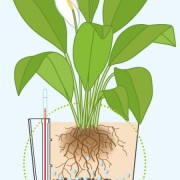 Diagram of how a self watering planter works