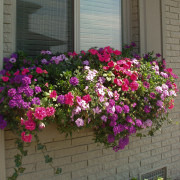 Use window planter reservoirs for container gardening success.