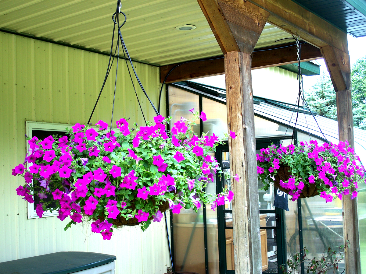 Hanging Year Round Containers