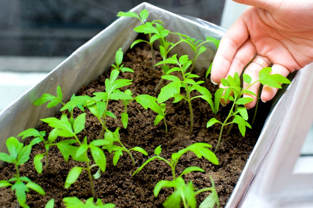 You can sprout seedlings in just about anything. Invest in long-term solutions for best success growing herbs in containers.