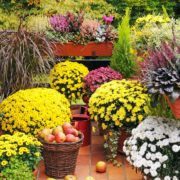 Group containers filled with colorful perennials to maximize seasonal decor.