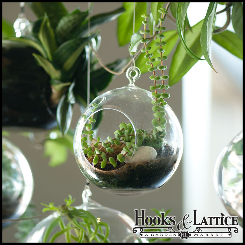 Glass Terrarium Planters - Ceiling, wall mount and tabletop