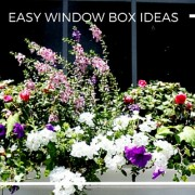 Easy Window Box Ideas for Boosting Curb Appeal