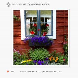window box beauty contest entry