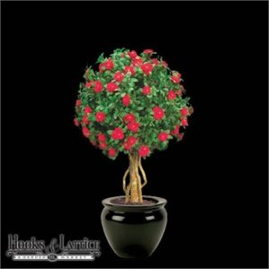 Azalea Topiary Ball