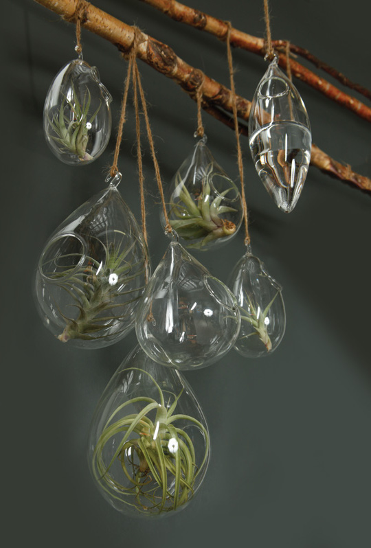 how to decorate with hanging glass terrariums hooks lattice blog. Black Bedroom Furniture Sets. Home Design Ideas