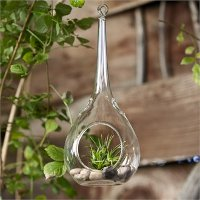 8 Inch Water Drop Hanging Terrarium