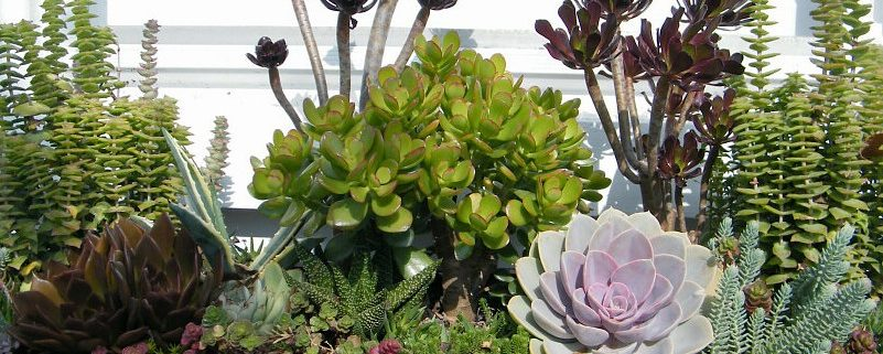 Window box with colorful succulents