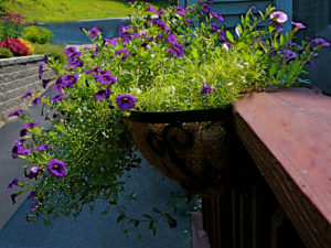 hayrack-window-box-purple-flowers