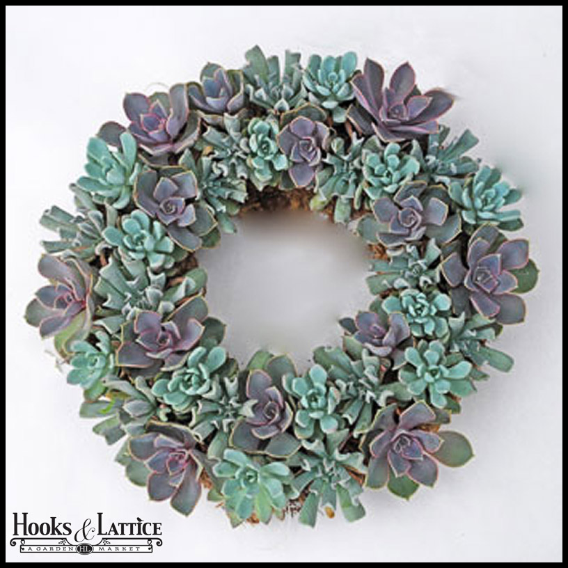 For a modern spring wreath, try this succulent garden decoration. Remember - Echeveria can be transplanted and are drought tolerant plants.