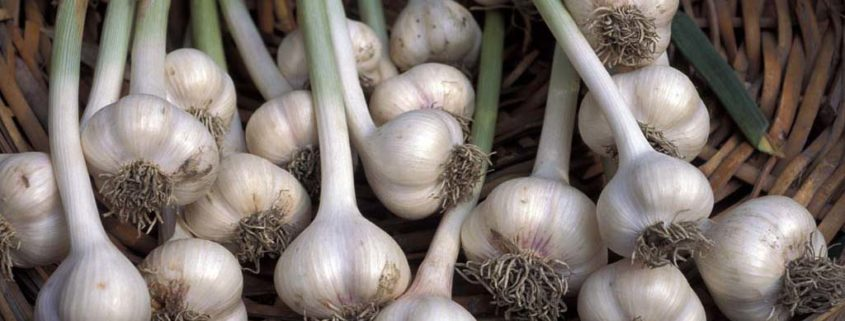 The sulfur compounds in garlic make it a tasty ingredient and great way to lower your blood pressure.