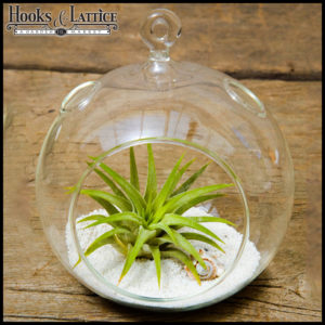 Fun & easy to assemble, this all-in-one DIY terrarium kit makes a great gift!
