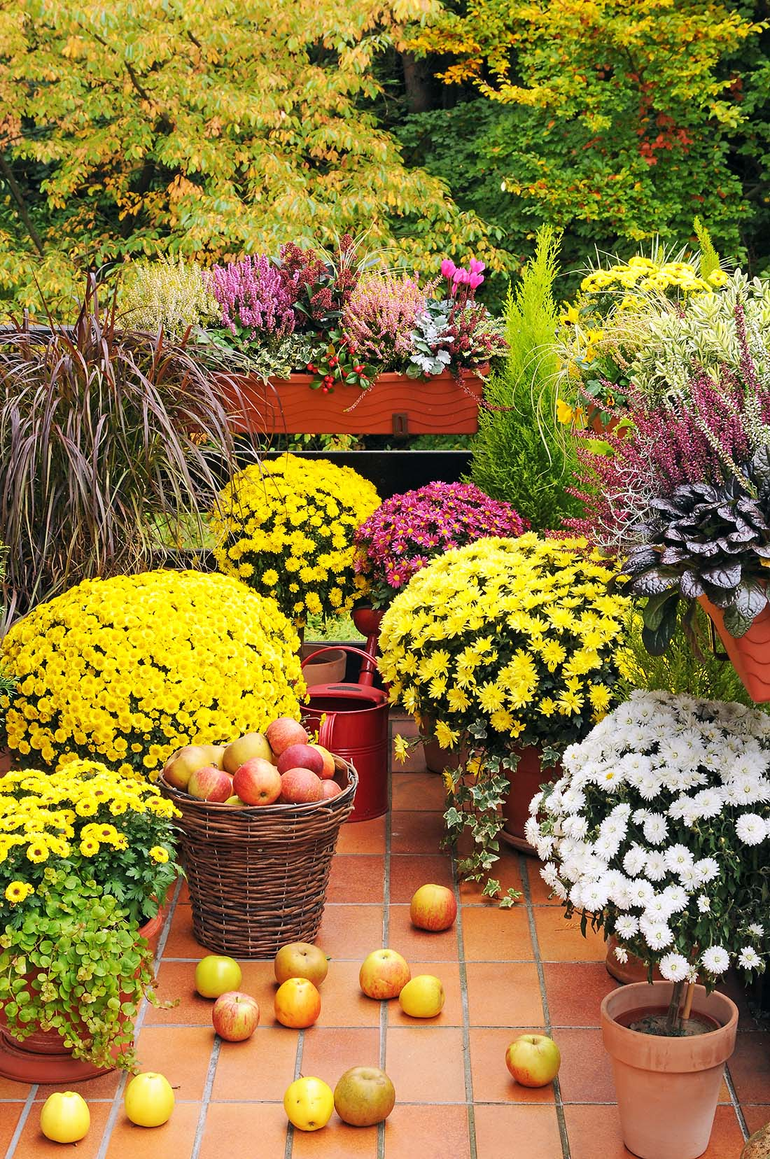 Best Containers For Perennial Success