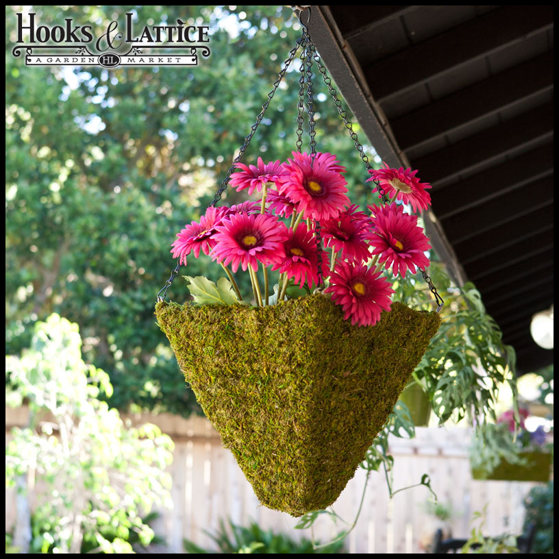 Moss hanging basket