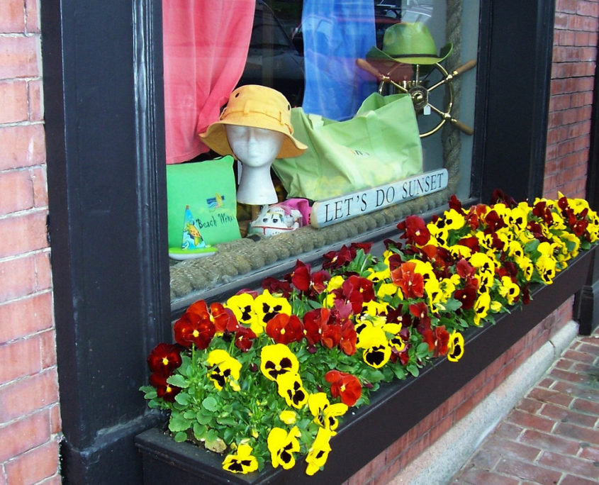 Window Box With Pansies AKA Violas