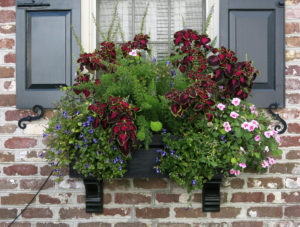 shade flowers for window boxes flower garden spillers for sun shade and in between the best cascading flowers window boxes hooks lattice blog