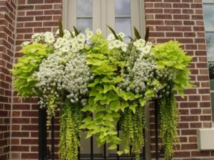 shade flowers for window boxes decorating spillers for sun shade and in between the best cascading flowers window boxes hooks lattice blog