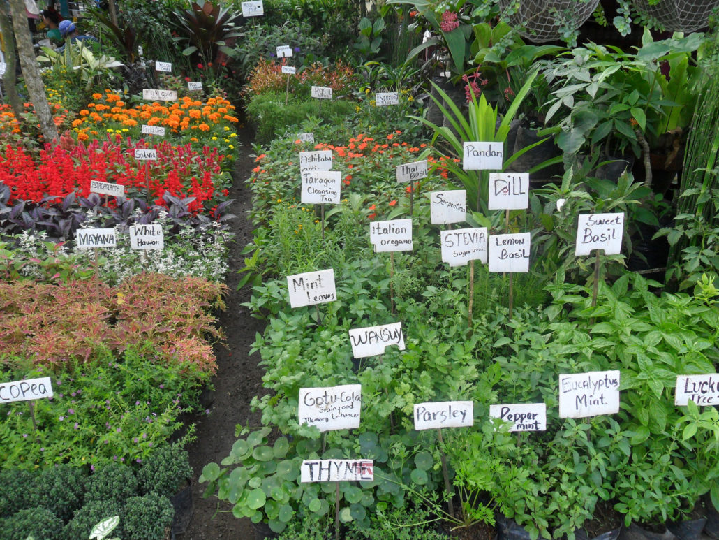 Likewise There Are Normal Sized Herbs That Do Thrive In Compact Areas These Include Oregano Chives Sweet Marjoram Tarragon And Lavender