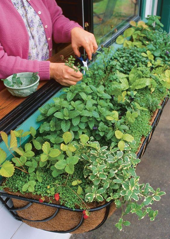A Guide To Planting The Perfect Window Box Herb Garden Hooks